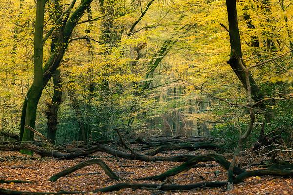 Autumn Glow PB6320