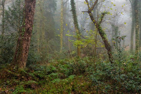 Rain Forest PB6479.2019