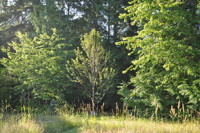 July 2012  Brandy Wine Maple at the East Entrance to the trail.