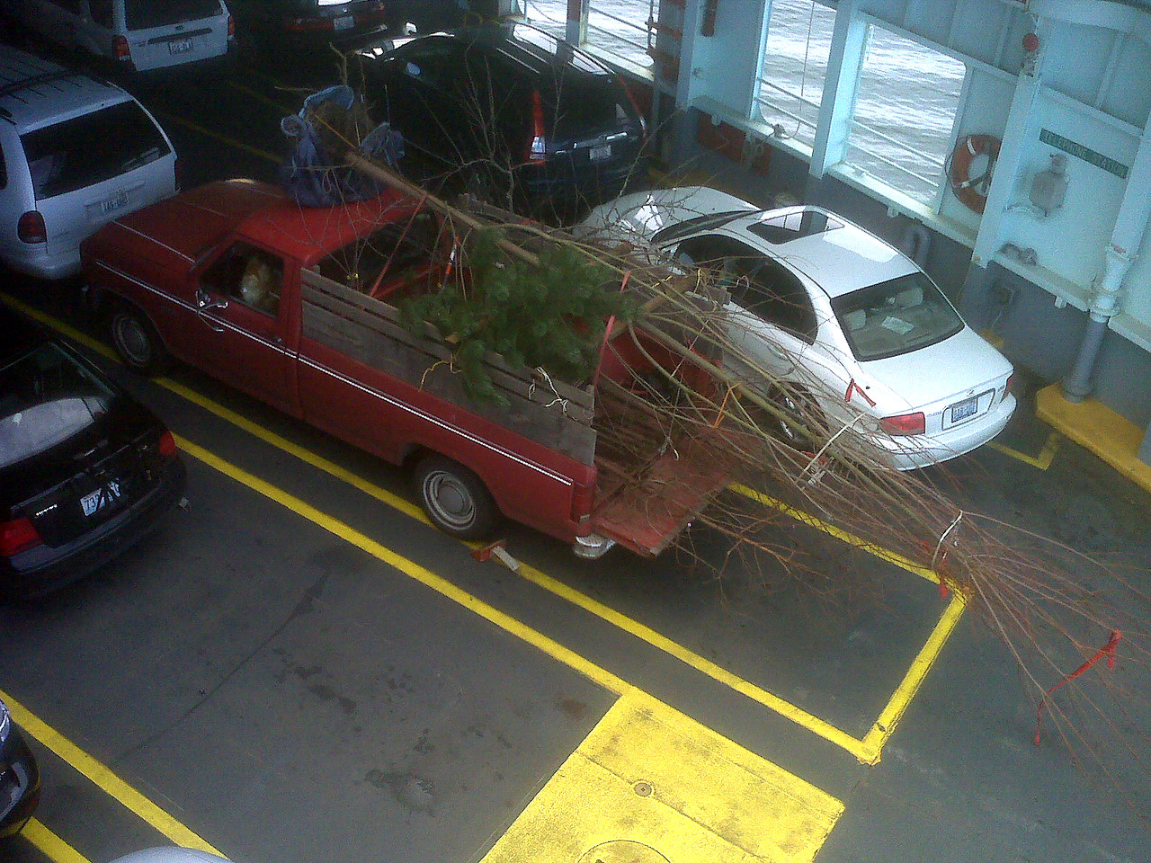 In one day:  20' Acer Maple, 7' Ponderosa Pine, Espaliered Apple, Apple, Plum, and Japanese Maple.  They put me on the boat last.  You can see why.  Truck has 185,00 miles.  Getting Tired.