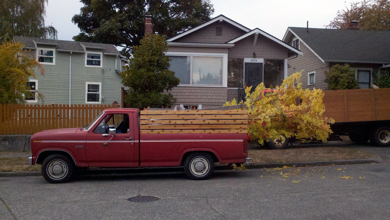10/17/12  Coral Bark Maple.  Ready for Transport.  I need to be very careful that people can see both tail lights.   Forgot my red flag on this leg of the trip.