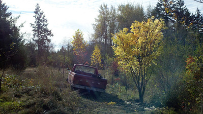 10/18/12  Coral Bark Maple.  The truck is right on the trail.
