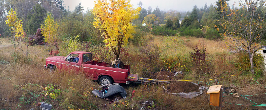 10/18/12  Coral Bark Maple.  Moving the tree off of the truck.