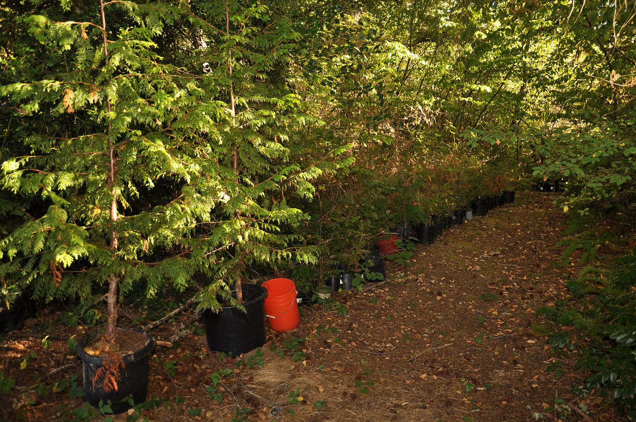 Trees for the fall to plant....