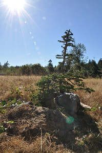 Future Home for the Alpine Fir... @ North Rock.
