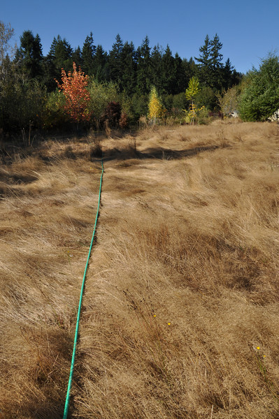 My first alternative to watering trees.  300' of hose to get water all over the place.  Water pressure drops quite a bit...