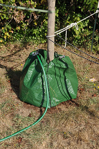 Gator Bags...  You can zip them together for big trees...