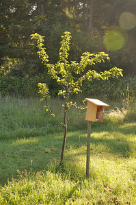 July 2012.  I put out mason bee homes next to every apple tree this year.
