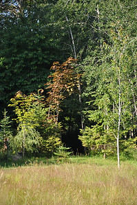 July 2012  West Entrance to the trail.  Red Norway Maple in the background.