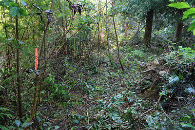This is hacked back by hand.  Blackberry bramble.  The line with orange tape is to mark the back of the property line.  The idea here is to define the property line and work back towards the center of the property creating an established garden along the way.  In unearthing everything there are small miracles to be discovered.