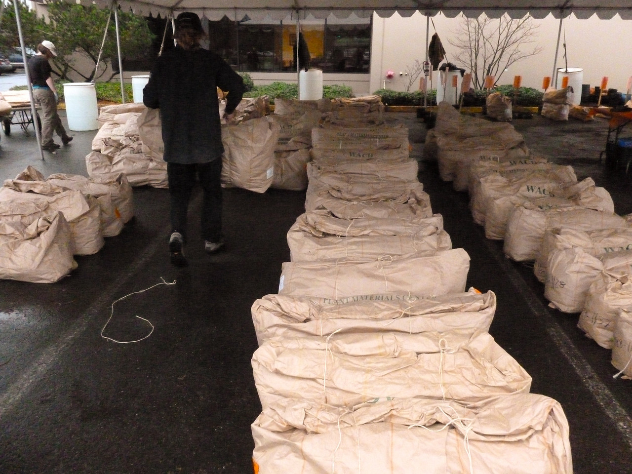 Bags of Tree seedlings.  I get 2 bags containing Douglas Firs, Sitka Spruce and Vine Maples totaling 310 tree seedlings.