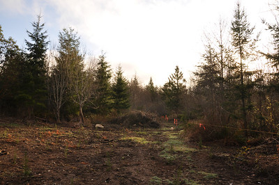 Looking East over the future forest.  March 3, 2013