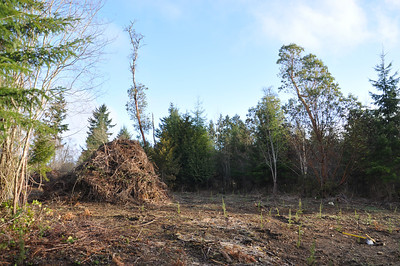 Future Forest with compost pile in the background.  March 3, 2013