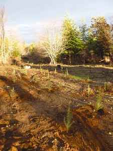 After the planting... a nice sunset.  March 2, 2013