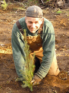 This was a very satisfying day!  A Douglas Fir Seedling goes into place.  March 2, 2013