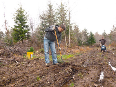 Simon planting Sitka Spruce March 2, 2013