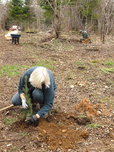 Donna puts final touches on the seedling after planting.  March 2, 2013