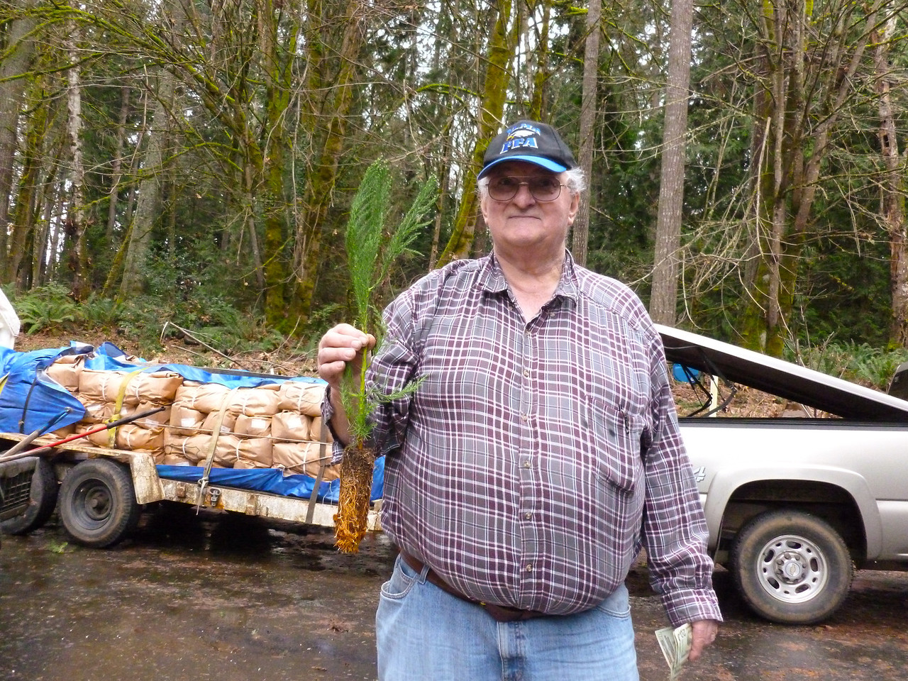 """Dave Pearsall planted an estimated 22 million trees in his lifetime.  He is a tree farmer.  He only lasted 2 days at Weyerhaeuser but he found his niche in private lands and land trusts.   """"Some day about 50 years from now when a Giant Sequioa is 10% mature, you may look on a mountain top in Pacific County and see trees we planted today. Giant Sequioa, Western White Pine and Douglas Fir. Sorry, I will not be around to remind you to see trees in 50 years.""""    -   Dave Pearsall         I picked up 100 of these Giant Sequoia Seedlings in West Olympia on March 1, 2013.  They will go in the ground on March 2, 2013.  These require a Dibble or in my case a 2 1/2"""" Diameter Rod to drive a hole into the ground.  I found these much easier to plant than the Douglas Fir Seedlings.    March 1, 2013"""