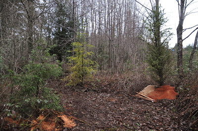 Diane's Redwood on the far left.  Planted Jan 7, 2013.  Beginning of Redwood Trail.