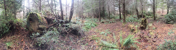 Old Stump in the Fern Forest