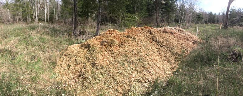 Wood Chips From Puget Sound Energy  March 2014