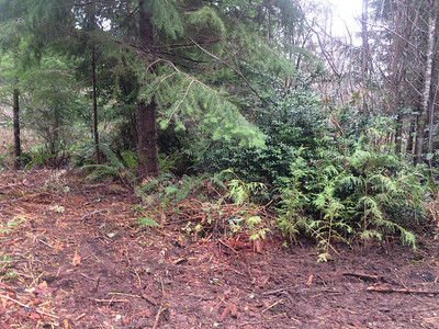 North Entrance Fern Forest March 2014