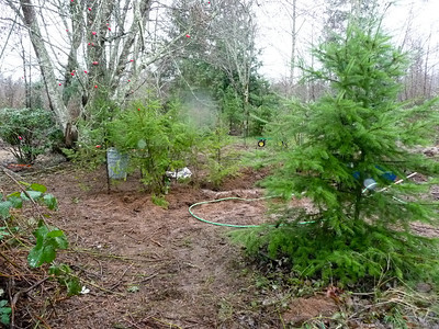 Feb 2012 Begin to place trees in ditch (after supplementing soil) after flooding with hose.
