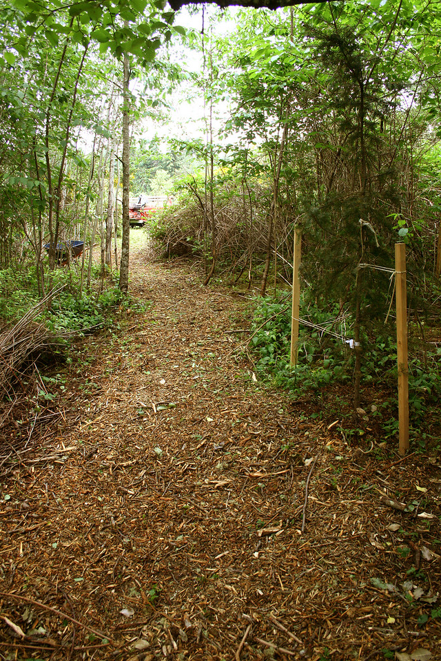 Looking back towards the house from the South West Corner.  Just put down the wood chip trail.