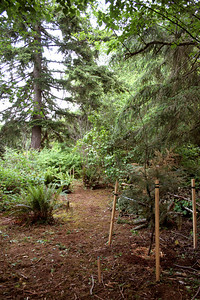 The idea here is to groom the floor of the forest with indigenous species of Northwest Vegetation.