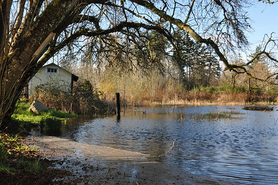 The pond got really big this year.  More ducks this year.  A Great Blue Heron.  Frogs... for months on end chirping in the evening.  This past year... A River Otter.  Only glimpses of him.