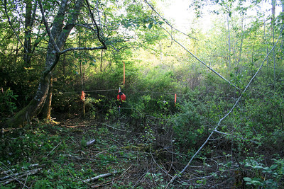 I machete through the blackberries in 2007 to find the property line.