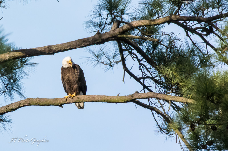 Woodlands Eagles-15-069