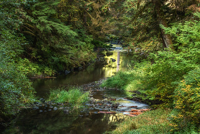 Bear Creek, Sol Duc Valley near Forks, Washington