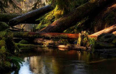 Woodlands, Upper Solduc Valley, Olympic National Park, Washington