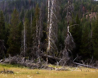 Mountain Forest, Goat Rock Wilderness, Cascades Range, Washington