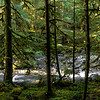 Upper Dungeness River, Olympic National forest, Washington