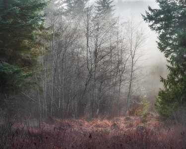 """Colors of Winter"", Joyce Valley, WA"