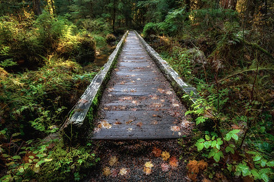 """Lover's Lane Trail"", Olympic National Park, Washington"