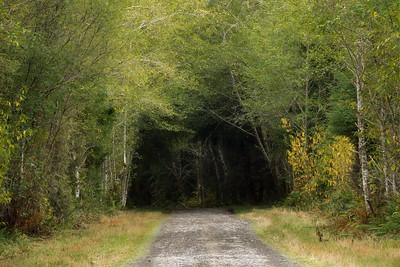 Logging Road near Forks, Washington