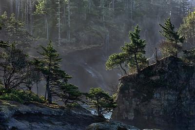 Coastal spruce and fir on rock bluff, Cape Flattery, Neah Bay, Washington