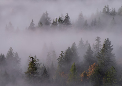 Mountain Fog, Olympic National Park, near Joyce, WA