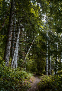 Quinault Rain Forest, Olympic National Forest, Washington