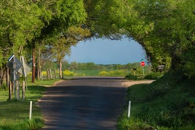 """Live oak road """"tunnel"""", Rock Creek, Texas"""