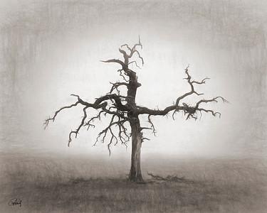 Dead oak tree, Falls County, Texas