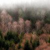 Foggy Hillside, Hoh Valley near Forks, Washington