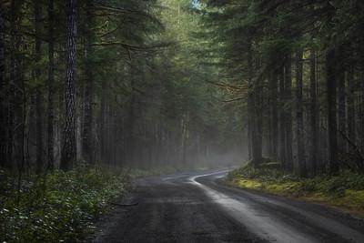 Woodland mist, Duckabush Road in January, Olympic National Forest, Washington