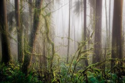 Rain Forest, Lower Hoh Valley near Forks, Washington