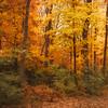 Autumn Blushed