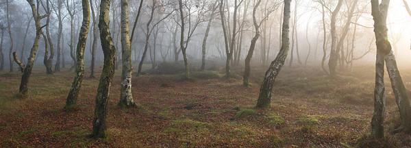 Stanton Moor