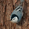 On a tree bark